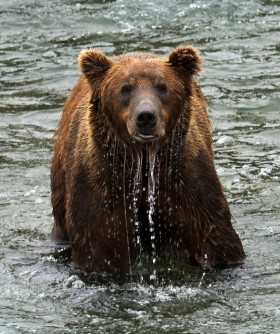 Katmai National Park and Preserve Bear