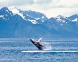 Wild Alaska – A Whale Watching Guide
