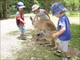 Seven Fun, Family-friendly Things to Do in Queensland, Australia