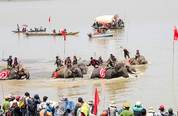 Elephants Swimming Competition - Buon Don District